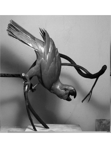 Mascarene Parrot in clay