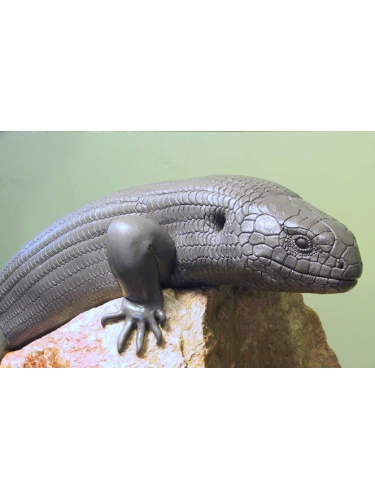Skink in clay