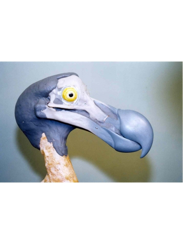 Dodo Head