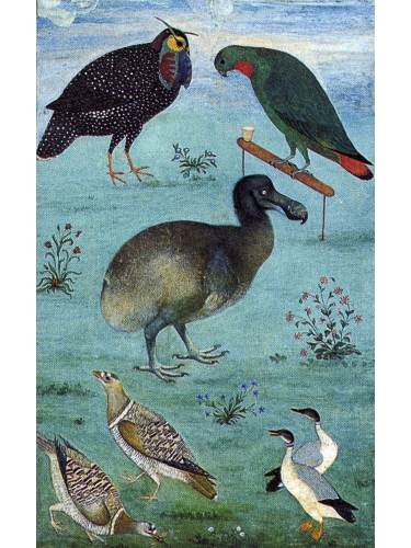 Birds in the Menagerie of Jahangir
