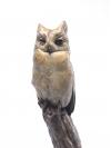 Mauritius Scops Owl