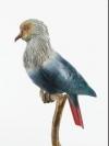 Mauritius Blue Pigeon by Nick Bibby